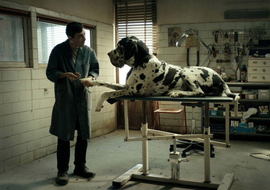 dogman-recensione